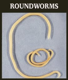 roundworms-1