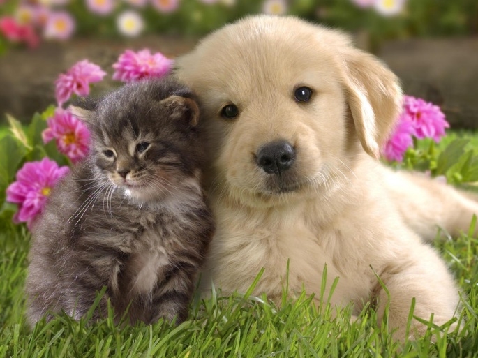 kitten-with-puppy